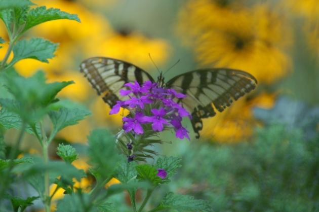 flutterby posing