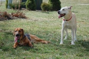 dog pals