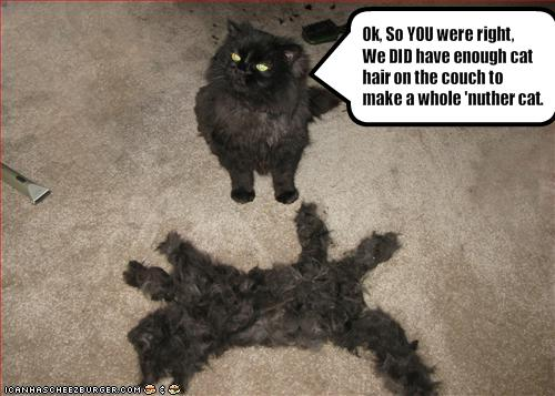 funny-pictures-cat-has-a-lot-of-extra-fur2